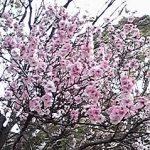 4月30日の日本一堅い(多分)競輪予想。